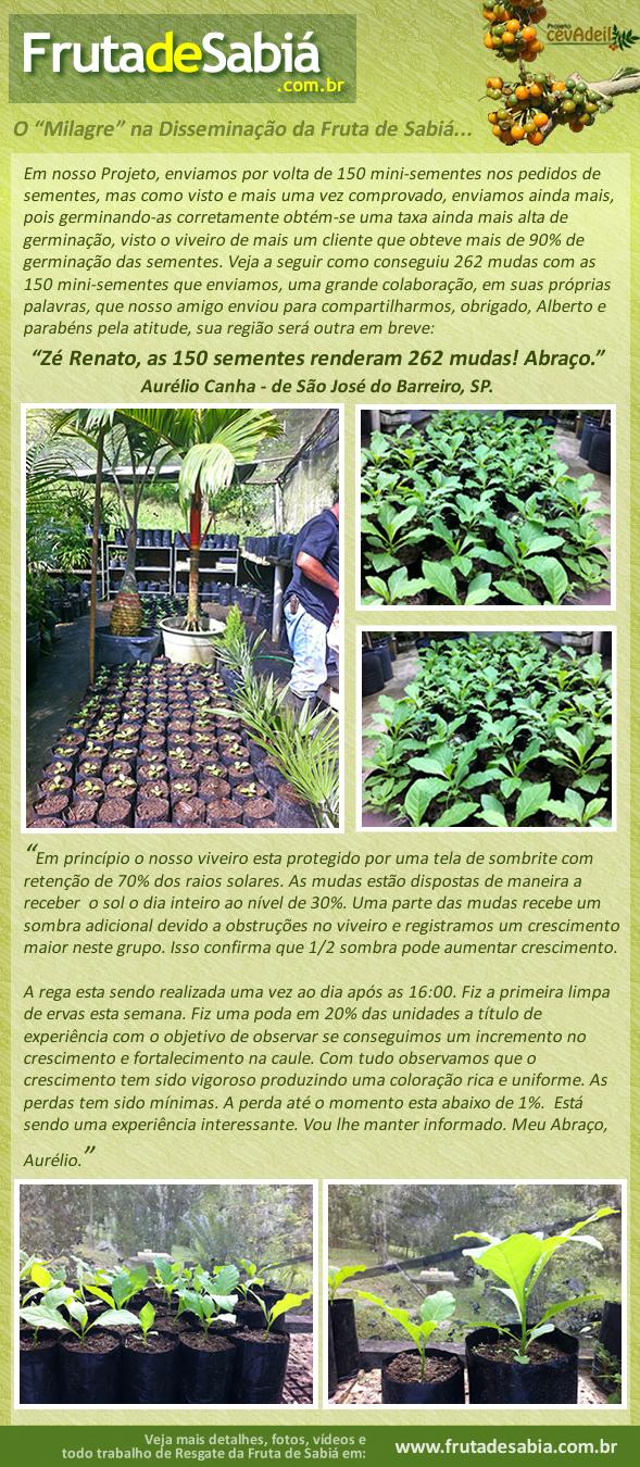 Depoimento de Alberto Canha dizendo como conseguiu 262 mudas com as 150 sementes da Fruta de Sabiá que lhe enviamos.