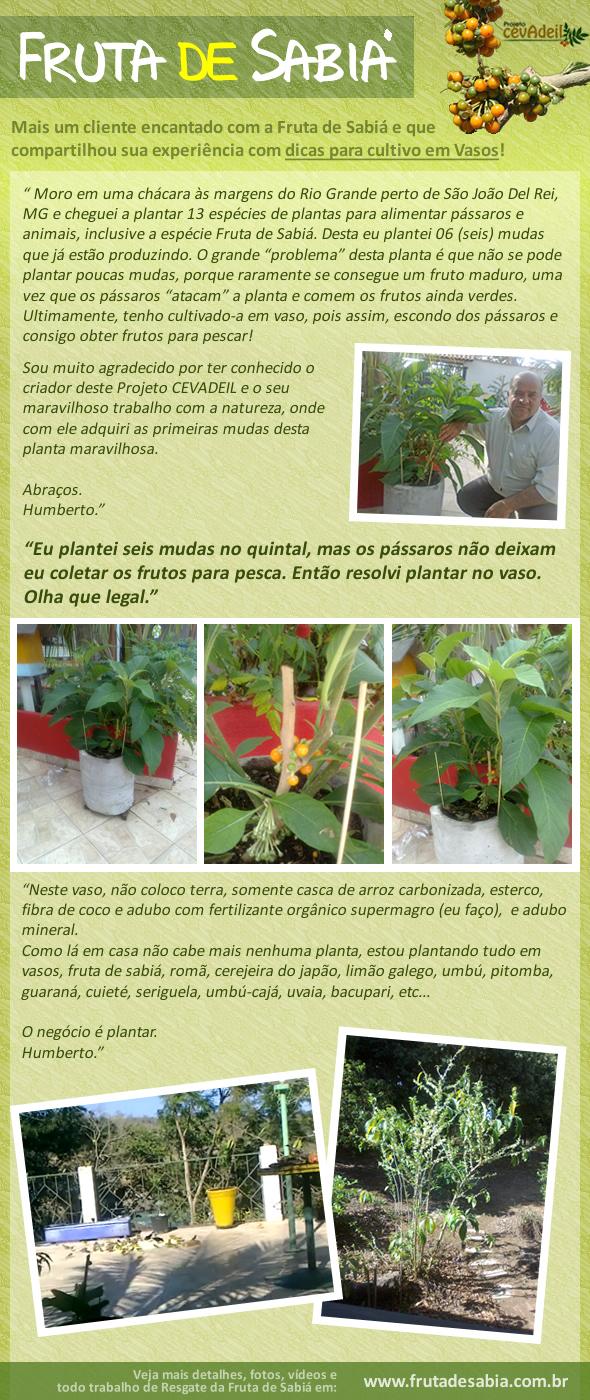 Depoimento de Humberto, dicas para cultivo em vasos.