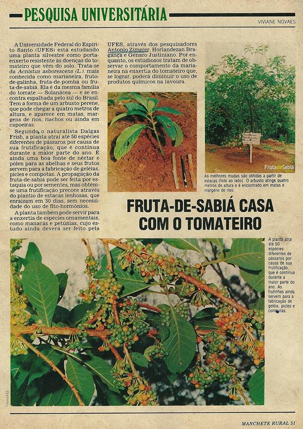 Matéria sobre pesquisa a respeito da Fruta de Sabiá.
